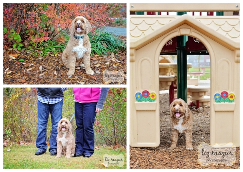 buffalo-grove-pet-photographer