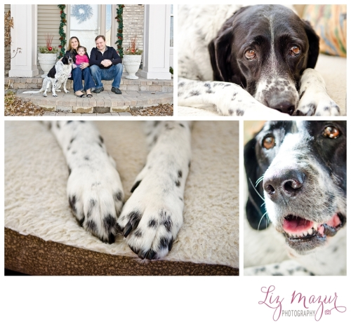 photographer for senior terminally ill pets