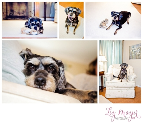 Pet Photographer Lake County IL