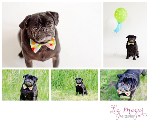 Boutique Pet Photographer Lake Bluff IL